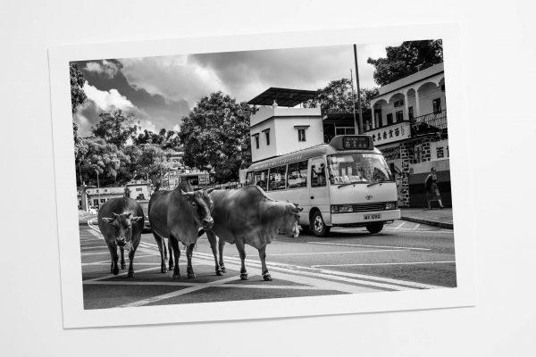 Rush Hour Sai Kung Print